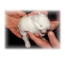 Gentle Hands Precious Bunny Photographic Print