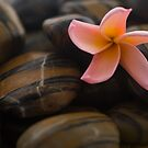 Frangipani and dews by afby