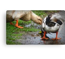 Better Than Pond Water Canvas Print
