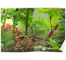 Mrs. Redbird on the Nest Poster