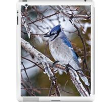 Blue Jay on Ice Covered Branch - Ottawa, Ontario iPad Case/Skin