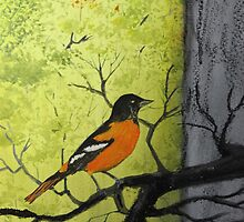 Baltimore Oriole by Jack G Brauer