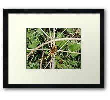 small tortoise shell Framed Print