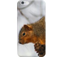 My tail is not your new scarf Bob! 0-o iPhone Case/Skin