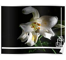 Lily Of My Heart Poster
