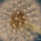 Make A Wish by Stan Owen