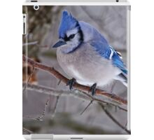Blue Jay in Tree - Ottawa, Ontario iPad Case/Skin
