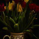 Tulips by GlennRoger