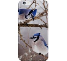 Blue Jays - Shirley's Bay, Ottawa iPhone Case/Skin