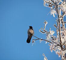 lone crow on a snowy tree by mrivserg