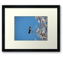 lone crow on a snowy tree Framed Print