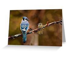 Blue Jay On Branch Greeting Card