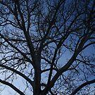 Tree at Dusk by Jenn  Dixon