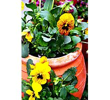 Pot overflowing with yellow delights Photographic Print
