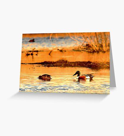 Northern Shoveler Ducks Greeting Card