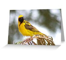 WERE YOU TALKING TO ME? (SOUTHERN) MASKED WEAVER - Ploceus velatus Greeting Card