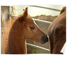 The Foal Poster