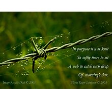 Collaboration ~ Beauty and the Barbed Wire Photographic Print