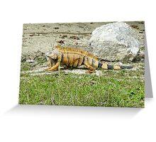 122514 iguana Greeting Card
