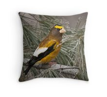 Evening Grosbeak On Pine 2 Throw Pillow