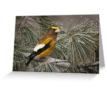 Evening Grosbeak On Pine 2 Greeting Card