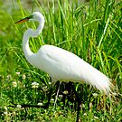 Egret Walk  by Mary Campbell