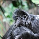 No Monkey Business by Natalie Cooper