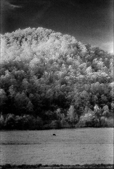 big hill little cow ........daniland by Juilee  Pryor