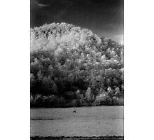 big hill little cow ........daniland Photographic Print