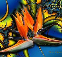 United Flames Create LIFE ... * >>> * !!! ... by Nira Dabush