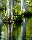 Cypress Swamp Reflections © by Mary Campbell
