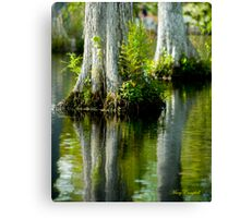 Cypress Swamp Reflections © Canvas Print