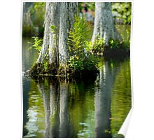Cypress Swamp Reflections © Poster