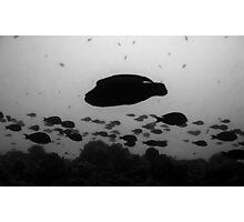 Cave Clan Photographic Print