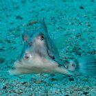 Triangular Fish by Mark Rosenstein