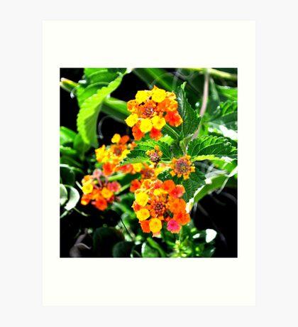 MULTI-COLORED LANTANA PLANT Art Print