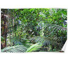 Rainforest Greens Poster