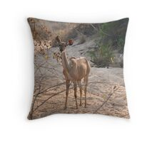 Greater Kudu female Throw Pillow