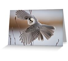 Gray Jay Take Off Greeting Card