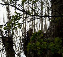 Squirrel by Elle Cooper
