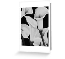 CALLA LILIES MONOCHROME ~ OIL ON CANVAS Greeting Card