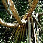 Tangle of roots, Sunshine Coast, Qld, Australia. by Sandra  Sengstock-Miller