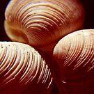 seashells ... by SNAPPYDAVE