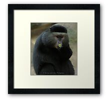 One-Armed Monkey at the Pittsburgh Zoo Framed Print