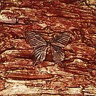 SPICE BUTTERFLY ~ METALLIC SCULPTURED CANVAS by LacewingDesign