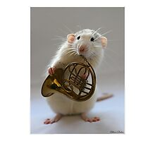 French horn. Photographic Print