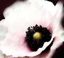 BOTANICAL ~ WHITE POPPY ~ DRY BRUSH AND OILS by LacewingDesign