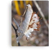 Pop goes the Milk Weed! Canvas Print