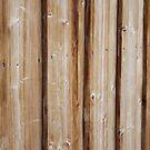 Wood by Paula Bielnicka