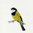 Golden Whistler by Faye Doherty